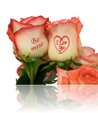 pink roses with inscription